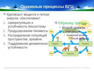 Основные процессы БГЦ Круговорот веществ и потоки энергии, обеспечивает:саморегу