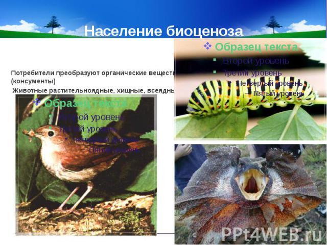 Население биоценоза Потребители преобразуют органические вещества (консументы) Животные растительноядные, хищные, всеядные