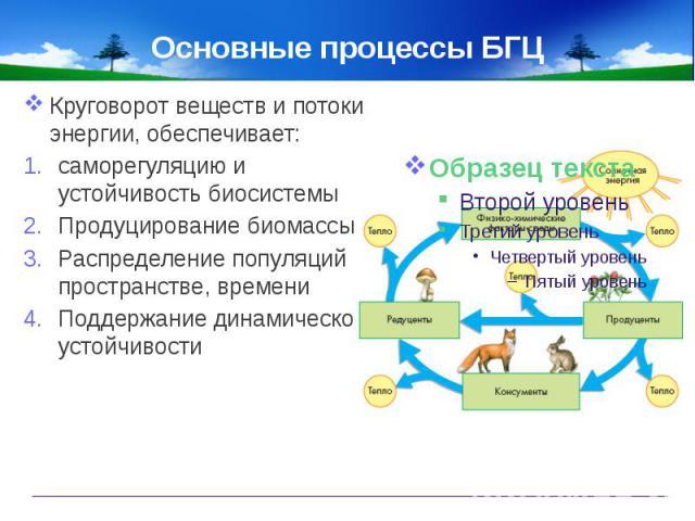 Основные процессы БГЦ Круговорот веществ и потоки энергии, обеспечивает:саморегуляцию и устойчивость биосистемыПродуцирование биомассыРаспределение популяций в пространстве, времениПоддержание динамической устойчивости