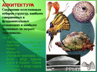 АРХИТЕКТУРАСохранение естественным отбором структур, наиболее совершенных в фунд