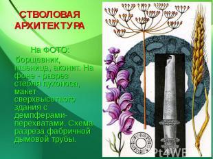 СТВОЛОВАЯ АРХИТЕКТУРА На ФОТО: борщевник, пшеница, аконит. На фоне - разрез стеб
