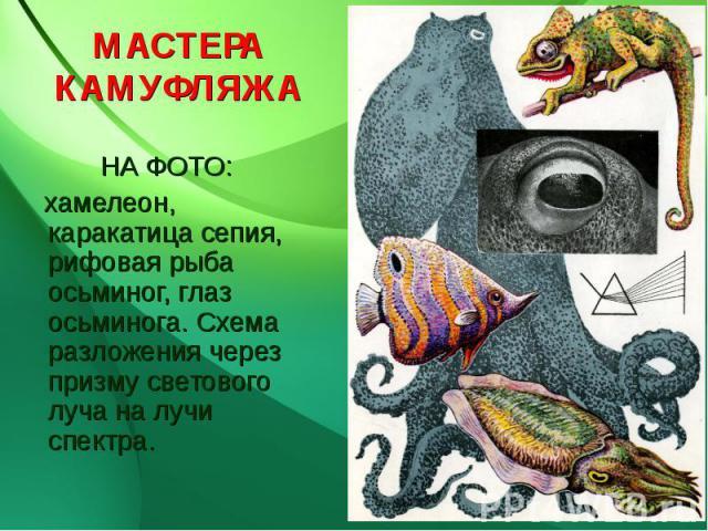 МАСТЕРАКАМУФЛЯЖА НА ФОТО: хамелеон, каракатица сепия, рифовая рыба осьминог, глаз осьминога. Схема разложения через призму светового луча на лучи спектра.