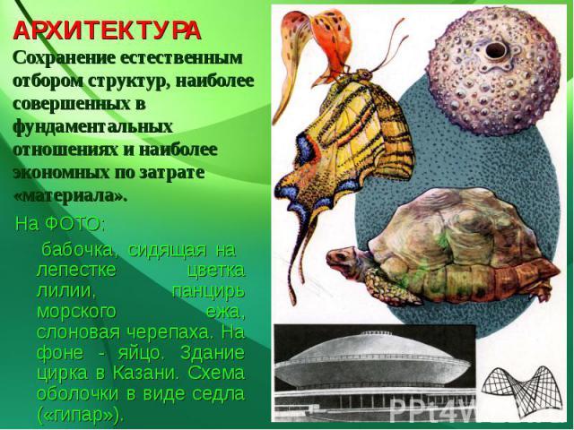 АРХИТЕКТУРАСохранение естественным отбором структур, наиболее совершенных в фундаментальных отношениях и наиболее экономных по затрате «материала». На ФОТО: бабочка, сидящая на лепестке цветка лилии, панцирь морского ежа, слоновая черепаха. На фоне …
