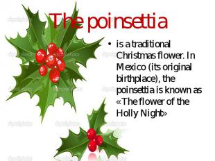 The poinsettia is a traditional Christmas flower. In Mexico (its original birthp