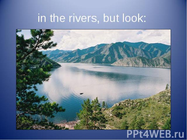 in the rivers, but look: