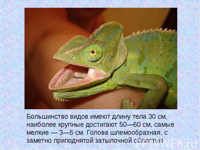 Большинство видов имеют длину тела 30см, наиболее крупные достигают 50—60см, самые мелкие— 3—5см. Голова шлемообразная, с заметно приподнятой затылочной областью