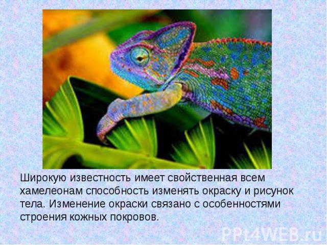 Широкую известность имеет свойственная всем хамелеонам способность изменять окраску и рисунок тела. Изменение окраски связано с особенностями строения кожных покровов.