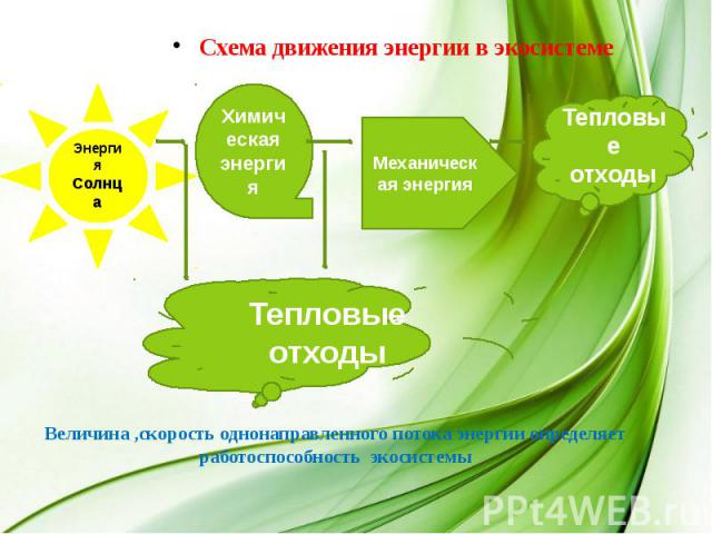 Схема движения энергии в экосистеме Величина ,скорость однонаправленного потока энергии определяет работоспособность экосистемы