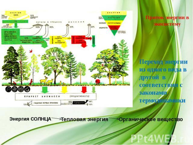 Приток энергии в экосистему Переход энергии из одного вида в другой в соответствии с законами термодинамики