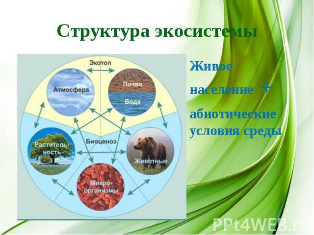 Структура экосистемы Живое население +абиотические условия среды