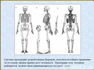 Система пропорций, разработанная Дюрером, получила всеобщее признание. За ее осн