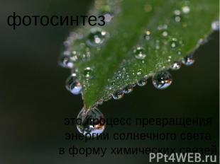 фотосинтез это процесс превращенияэнергии солнечного светав форму химических свя