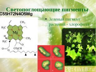 Светопоглощающие пигменты Зеленый пигмент растений - хлорофилл