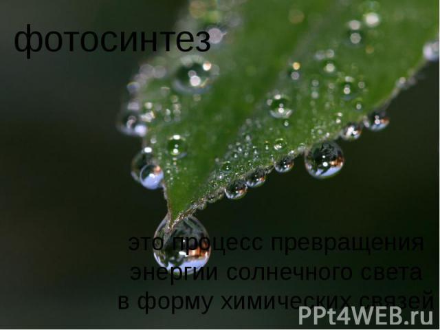фотосинтез это процесс превращенияэнергии солнечного светав форму химических связей