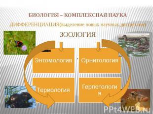 БИОЛОГИЯ – КОМПЛЕКСНАЯ НАУКА ДИФФЕРЕНЦИАЦИЯ(выделение новых научных дисциплин)ЗО