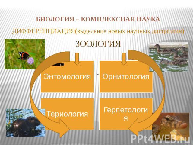 БИОЛОГИЯ – КОМПЛЕКСНАЯ НАУКА ДИФФЕРЕНЦИАЦИЯ(выделение новых научных дисциплин)ЗООЛОГИЯ.