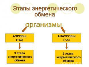 Этапы энергетическогообмена организмыАЭРОБЫ(+О2)3 этапа энергетическогообменаАНА