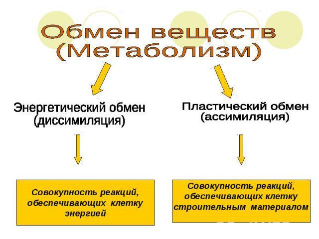 Обмен веществ(Метаболизм)Энергетический обмен(диссимиляция)Совокупность реакций,обеспечивающих клеткуэнергиейПластический обмен(ассимиляция)Совокупность реакций,обеспечивающих клеткустроительным материалом