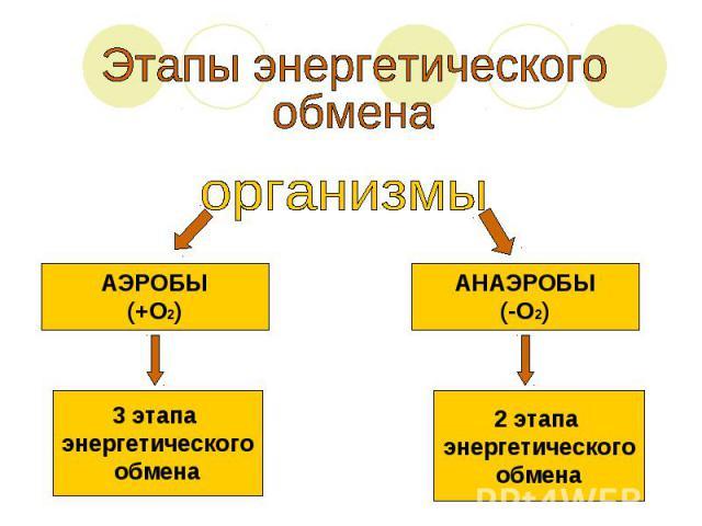 Этапы энергетическогообмена организмыАЭРОБЫ(+О2)3 этапа энергетическогообменаАНАЭРОБЫ(-О2)2 этапа энергетическогообмена