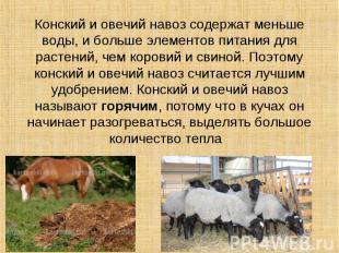 Конский и овечий навоз содержат меньше воды, и больше элементов питания для раст