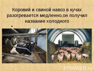 Коровий и свиной навоз в кучах разогревается медленно,он получил название холодн