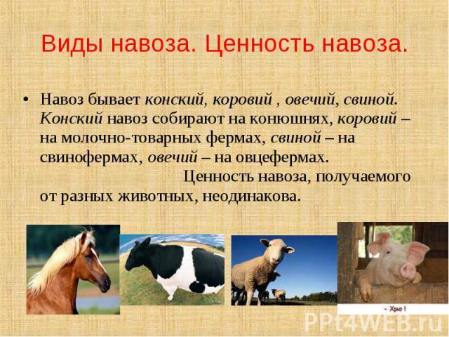 Виды навоза. Ценность навоза. Навоз бывает конский, коровий , овечий, свиной. Конский навоз собирают на конюшнях, коровий – на молочно-товарных фермах, свиной – на свинофермах, овечий – на овцефермах. Ценность навоза, получаемого от разных животных,…