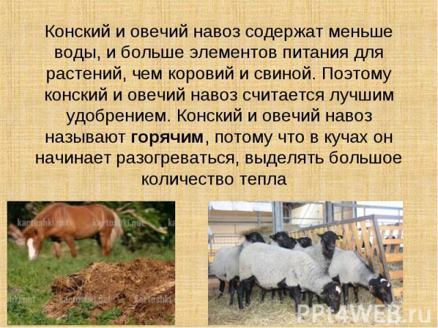 Конский и овечий навоз содержат меньше воды, и больше элементов питания для растений, чем коровий и свиной. Поэтому конский и овечий навоз считается лучшим удобрением. Конский и овечий навоз называют горячим, потому что в кучах он начинает разогрева…