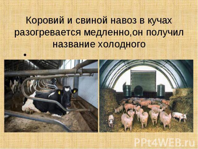 Коровий и свиной навоз в кучах разогревается медленно,он получил название холодного