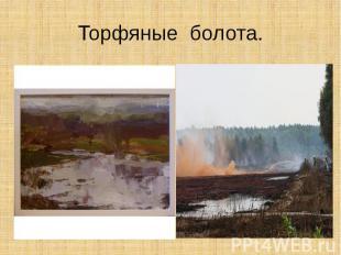Торфяные болота.