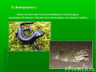В) Живородность. Известна для хвостатых (альпийская саламандра), некоторых безно