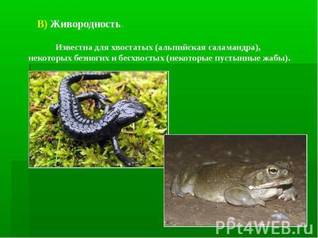 В) Живородность. Известна для хвостатых (альпийская саламандра), некоторых безногих и бесхвостых (некоторые пустынные жабы).