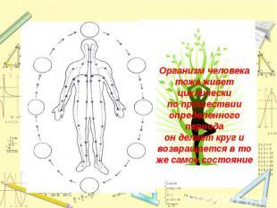 Организм человека тоже живет циклическипо прошествии определенного периодаон дел