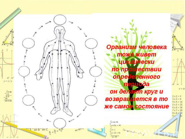 Организм человека тоже живет циклическипо прошествии определенного периодаон делает круг и возвращается в то же самое состояние