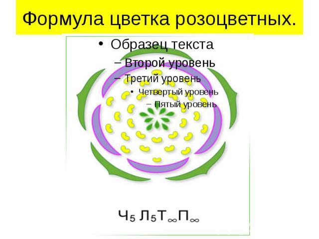 Формула цветка розоцветных.