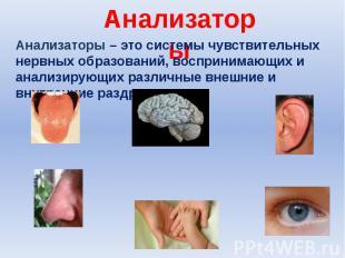 Анализаторы Анализаторы – это системы чувствительных нервных образований, воспри
