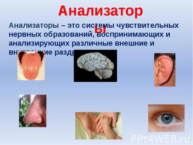 Анализаторы Анализаторы – это системы чувствительных нервных образований, воспринимающих и анализирующих различные внешние и внутренние раздражения.