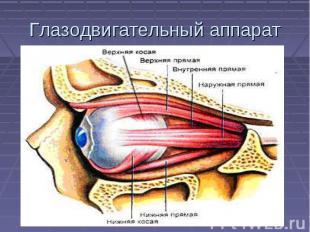 Глазодвигательный аппарат