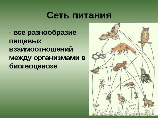 Сеть питания - все разнообразие пищевых взаимоотношений между организмами в биогеоценозе