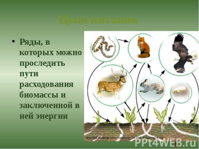 Цепи питания Ряды, в которых можно проследить пути расходования биомассы и заключенной в ней энергии