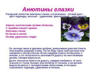 Анютины глазки Раскрыли лепестки анютины глазки, а в венчиках – белый цвет – цве