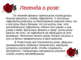 Легенда о розе: По легенде древних греков роза посвящалась богине красоты и любв