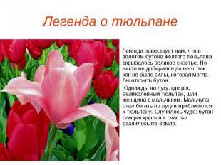 Легенда о тюльпане Легенда повествует нам, что в золотом бутоне желтого тюльпана