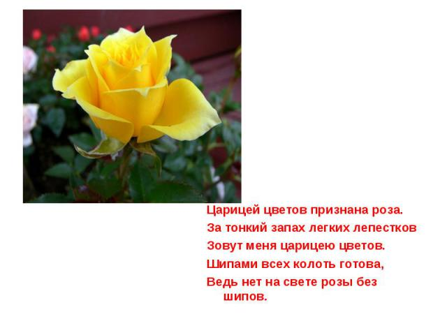 Царицей цветов признана роза.За тонкий запах легких лепестковЗовут меня царицею цветов.Шипами всех колоть готова,Ведь нет на свете розы без шипов.