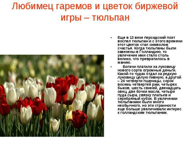 Любимец гаремов и цветок биржевой игры – тюльпан Еще в 13 веке персидский поэт воспел тюльпан и с этого времени этот цветок стал символом счастья. Когда тюльпаны были завезены в Голландию, то увлечение ими стало столь велико, что превратилось в мани…