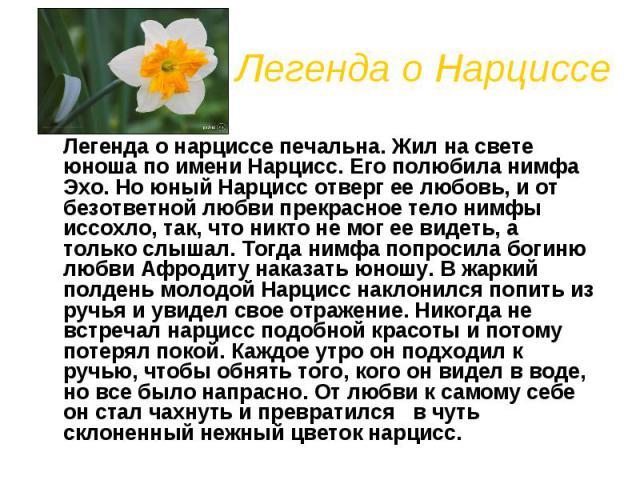 Легенда о Нарциссе Легенда о нарциссе печальна. Жил на свете юноша по имени Нарцисс. Его полюбила нимфа Эхо. Но юный Нарцисс отверг ее любовь, и от безответной любви прекрасное тело нимфы иссохло, так, что никто не мог ее видеть, а только слышал. То…