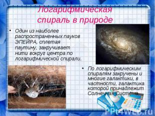 Логарифмическая спираль в природе Один из наиболее распространенных пауков ЭПЕЙР