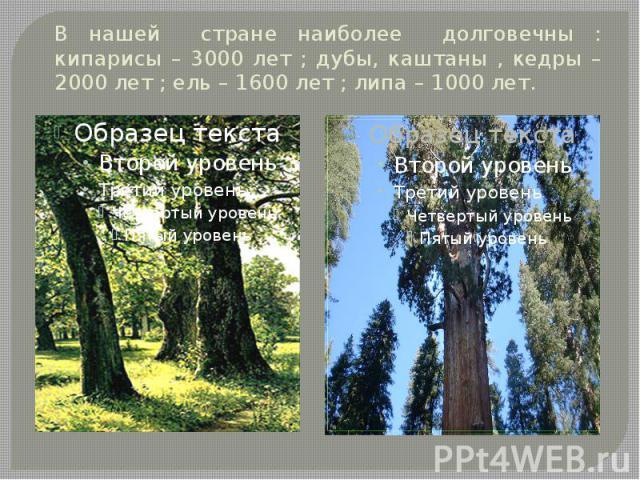 В нашей стране наиболее долговечны : кипарисы – 3000 лет ; дубы, каштаны , кедры – 2000 лет ; ель – 1600 лет ; липа – 1000 лет.