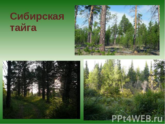 Сибирскаятайга