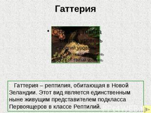 Гаттерия Гаттерия – рептилия, обитающая в Новой Зеландии. Этот вид является един