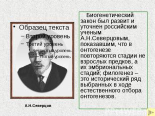 Биогенетический закон был развит и уточнен российским ученым А.Н.Северцовым, пок